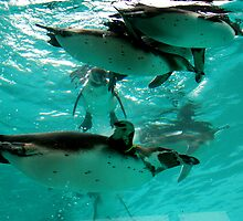 Curious Penguins by ApeArt
