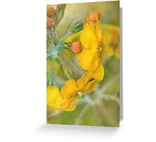 precious primrose Greeting Card