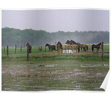 HORSE FARM ROSTOCK GERMANY Poster