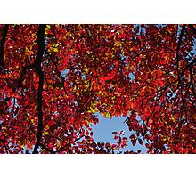 Red Skies Photographic Print