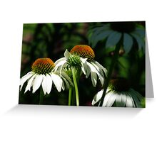 Group of Echinacea Flowers Greeting Card