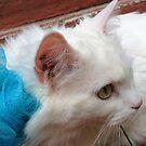 Sugar King Cat by Nora Fraser