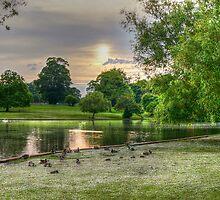 Verulamium park by Mark Thompson