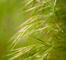 Wispy Grass by Nicole  Markmann Nelson