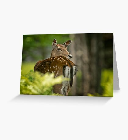 Fallow Deer Greeting Card