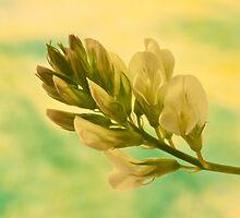 White Wild Flower  by Sandra Foster
