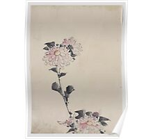 Pink flower blossoms on low stalk and two on a tall stalk 001 Poster