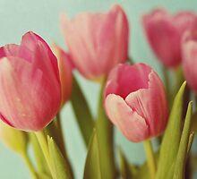 pink tulips by beverlylefevre