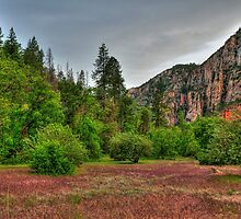 Canyon Orchards In Sedona by Diana Graves Photography