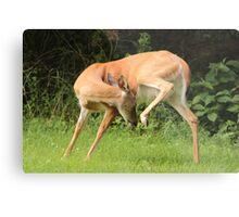 Deer Yoga Metal Print