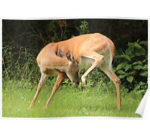 Deer Yoga Poster