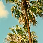 Palm Trees by Jason Stabile