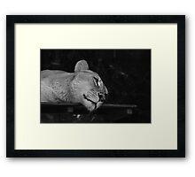 Lazy Lion Framed Print