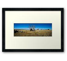 Gnarled panorama Framed Print