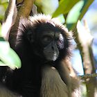 Monkey sitting in Tree by Stephanie Jensen