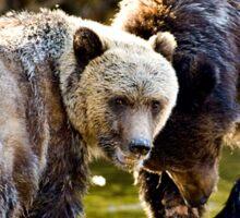 Grizzly Bear & Cub 2 Sticker