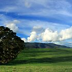 Yarra Valley 1 by Charles Kosina