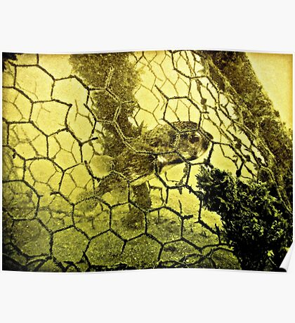 THE HONEYCOMB OF LIFE Poster