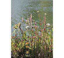 Stow Lake Photographic Print