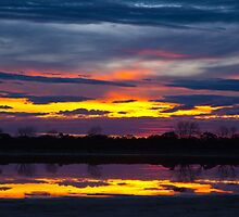 Reflections by Paul Diss