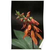 beauty in orange Poster