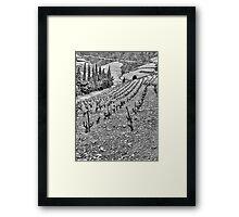 vineyard Framed Print
