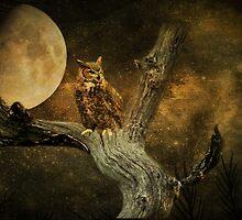 Night Hunt by swaby