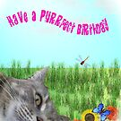 Have A Purrrfect Bithday by judygal