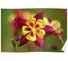 Flower Power Macro Poster