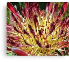 Complicated Crown Canvas Print
