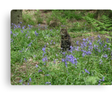 Mia in the bluebells Canvas Print