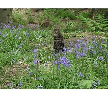 Mia in the bluebells Photographic Print