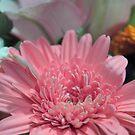 Pretty in Pink by Bree Lucas