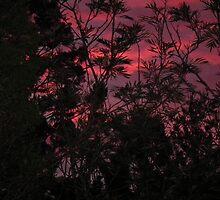 Australian Sunset by Hannah Saveall