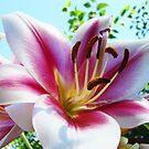 Lilies Flower Garden Art Print Pink White Lily by BasleeArtPrints