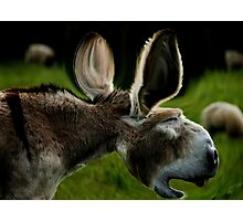 When Donkeys Sneeze Photographic Print