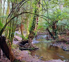 Nature's pallete, Mt Field National Park by imaginethis