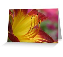 Colorful Lilly Greeting Card