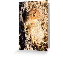 Slender Mongoose  Greeting Card