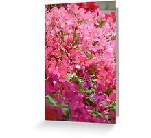 colorful Impatients Greeting Card