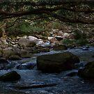 Bahana Creek 1 by Chris Cohen
