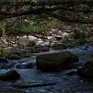 Bahana Creek 1 by Chris Cohen