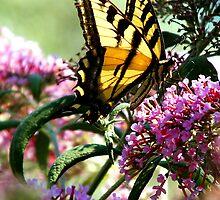 Butterfly by mrfriendly