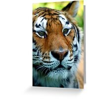 Fancy Little Tiger Greeting Card