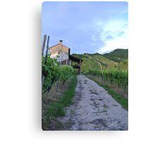 Vineyard Path Canvas Print