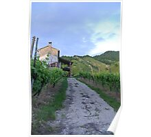 Vineyard Path Poster