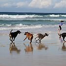 Running Free By the Sea by aussiebushstick