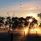 First light by Jeanette Varcoe.