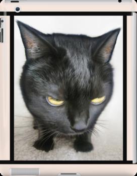 Cranky Kitty by Jaeda DeWalt