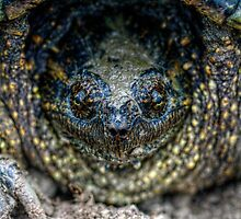 Snapping Turtle I by EelhsaM